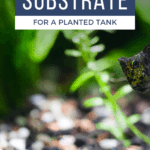 Best Substrate for a Planted Tank - Pin