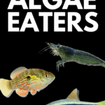 Complete Guide to the Best Algae Eaters - pin