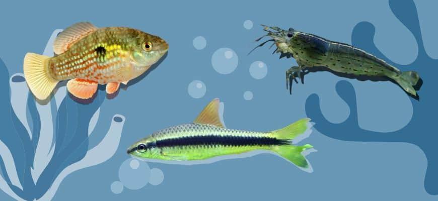 Algae Eaters