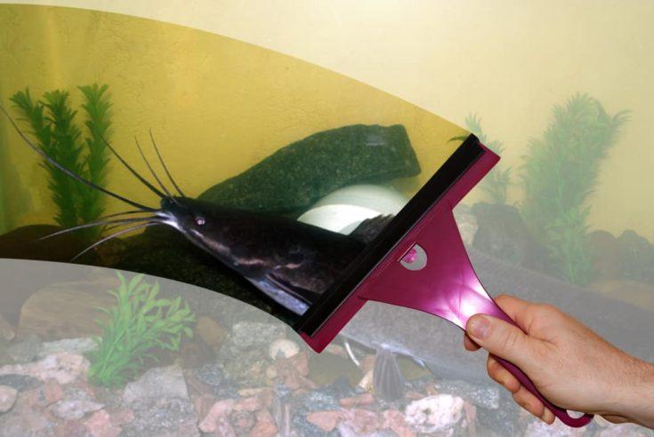 Hand washing glass aquarium views African catfish fish