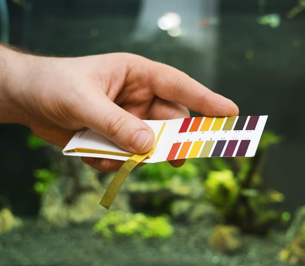 Male hand holding PH tests in front of freshwater aquarium.