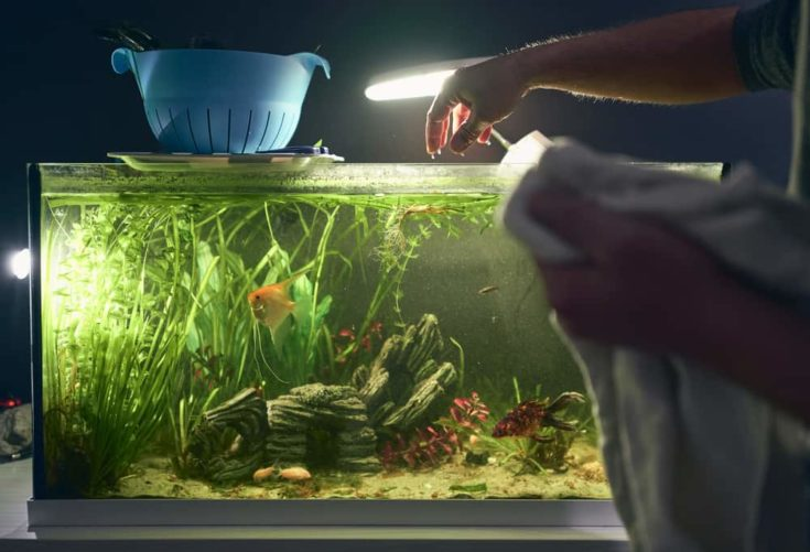 detail of man's hand coming out of the aquarium during his cleaning. Household chores concept