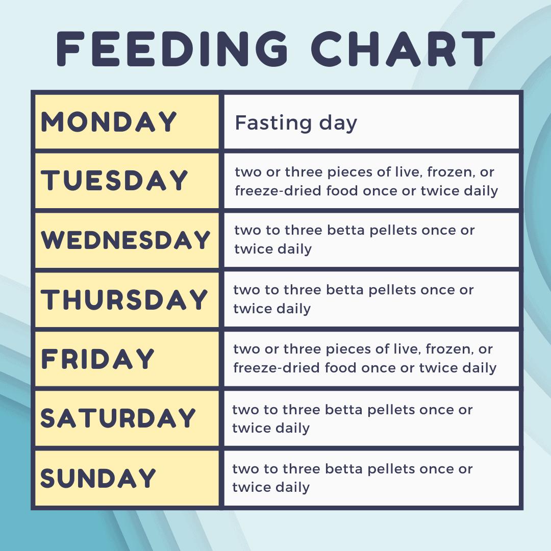 Betta Fish Feeding Chart