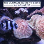 Fishkeeping - The Ultimate Guide to Being an Aquarist -pin