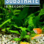 How Many Bags of Substrate is Needed? - Pin
