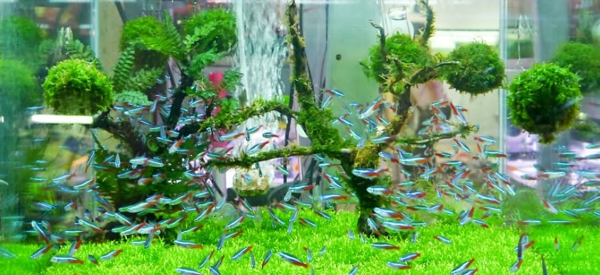 How The Nitrogen Cycle Works - Aquarium with small fishes and a beautiful aquascape.