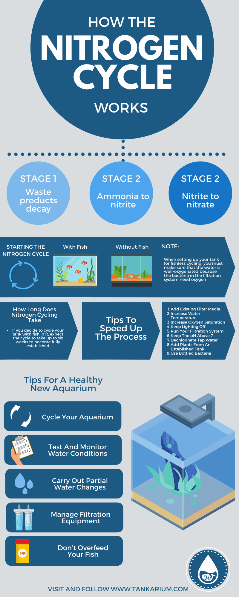 How The Nitrogen Cycle Works - Infographic