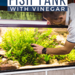 How To Clean a Fish Tank With Vinegar - Pin