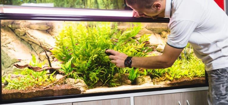 Man using magnetic aquarium cleaner to clean aquarium.