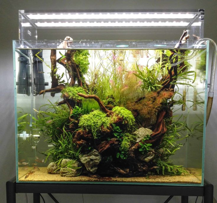 Lakebottom Aquascape with Sandy Substrate
