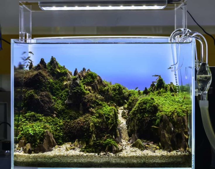 close up image of underwater landscape nature style aquarium tank with a variety of aquatic plants inside.