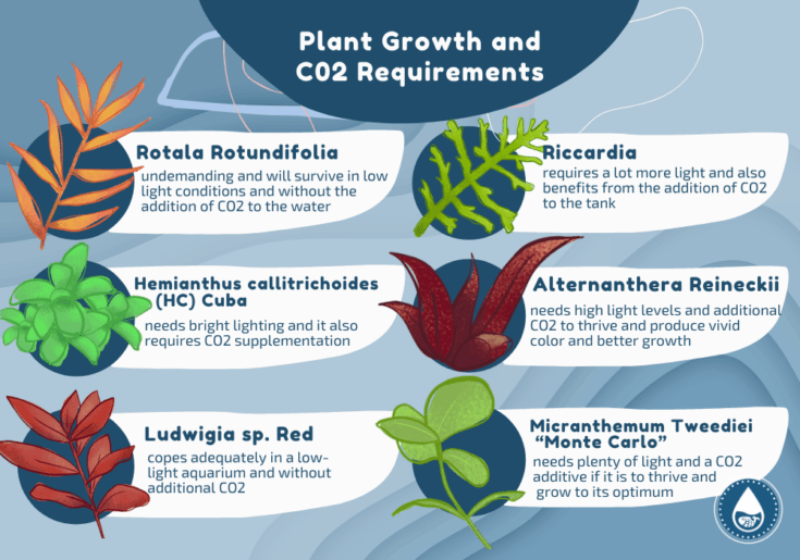 Plant Growth and CO2 Requirements miniinfographic