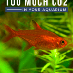 Signs Of Too Much CO2 In Your Aquarium - Pin