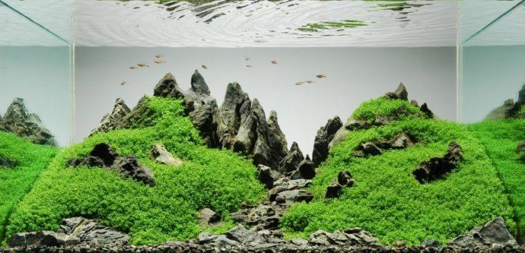 Simple Iwagumi Aquascape for Big Tanks