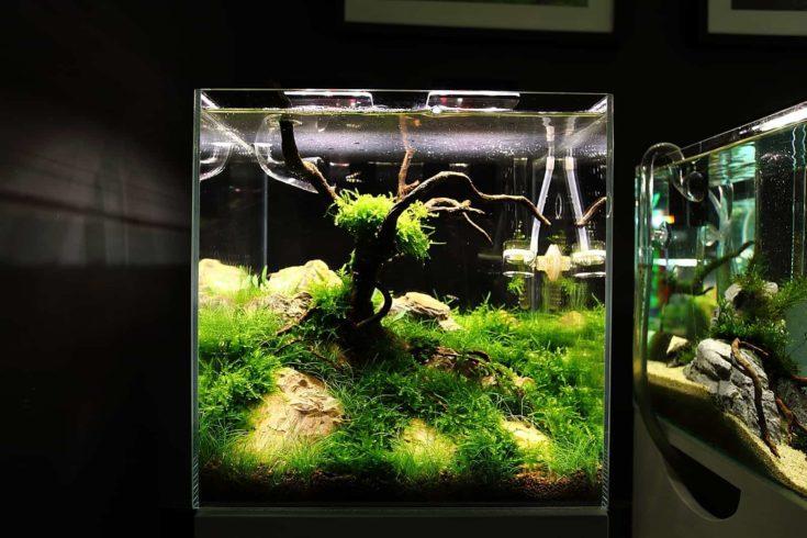 Small Meadow Aquascape