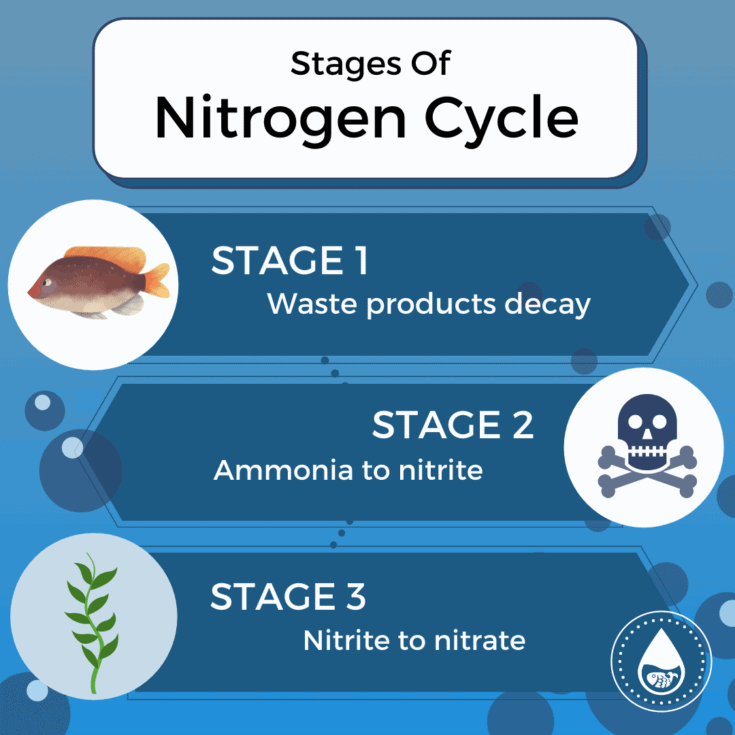 Stages Of Nitrogen Cycle - Mini infographic