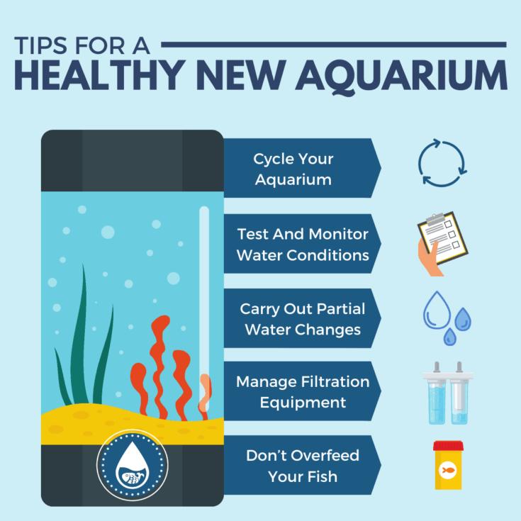 Tips For A Healthy New Aquarium - mini infographic