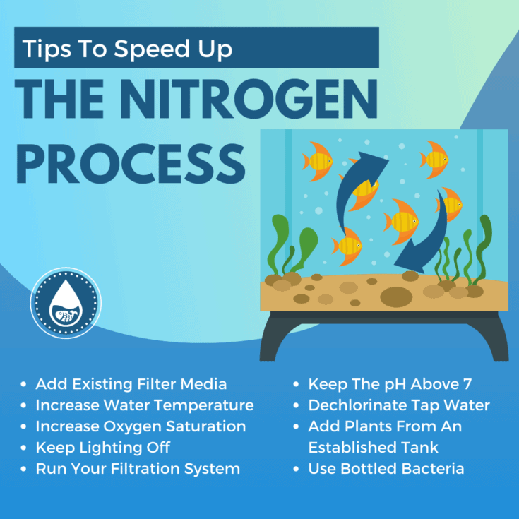 Tips To Speed Up The Nitrogen Process - mini infograpic