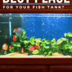 Where's the best place for your fish tank?- pin
