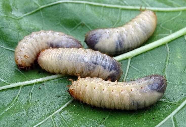 live worm on green leaf
