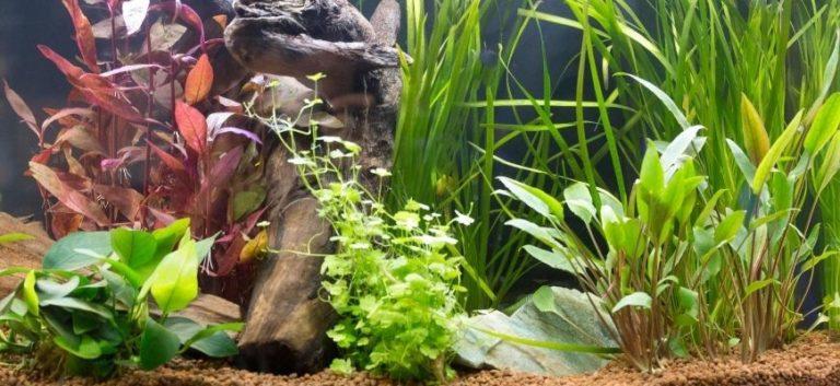 Different plants in the aquarium