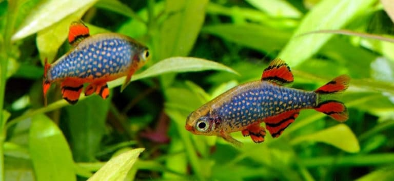 Two beautiful fishes inside tank aquarium.