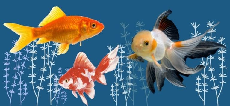 Three goldfish in printed blue background