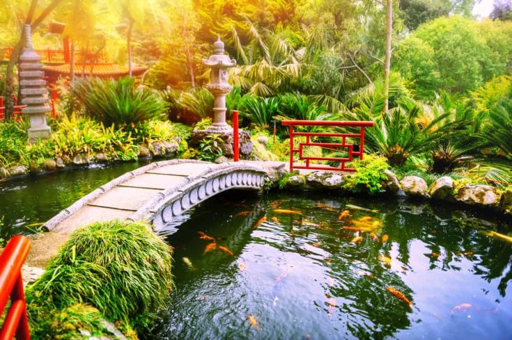 Japanese garden with swimming koi fishes in pond. Nature background