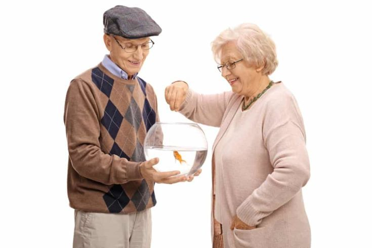 Elderly man holding a bowl with a goldfish and an elderly woman feeding it isolated on white background