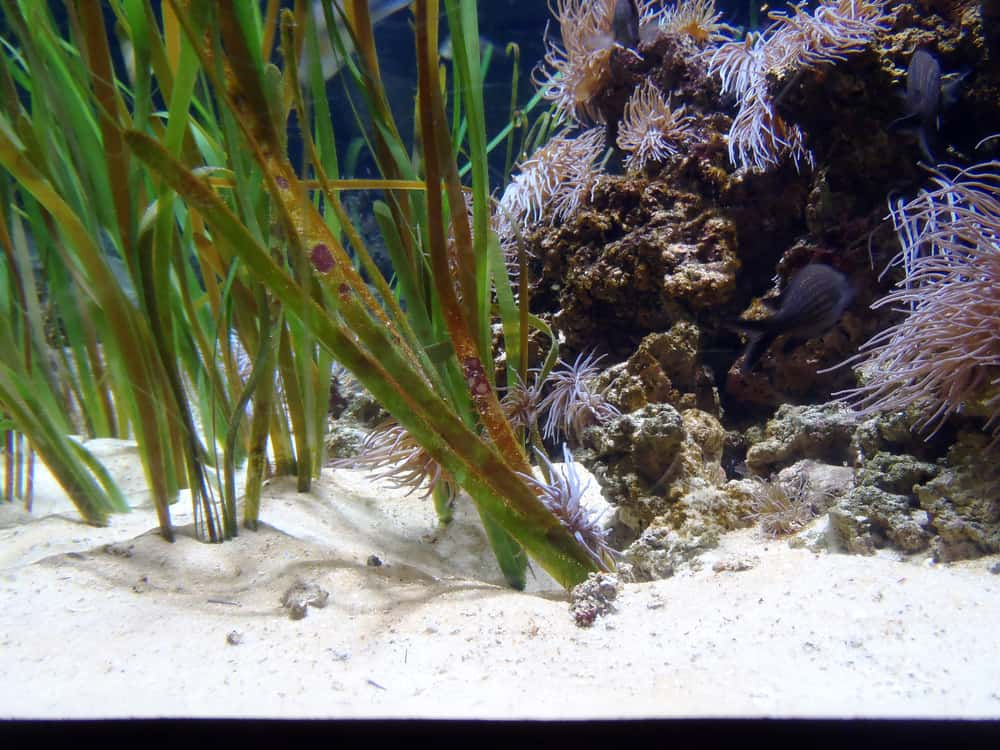 background of the aquarium with green plants