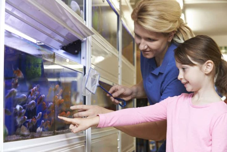 Girl With Sales Assistant Choosing Goldfish In Pet Store