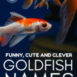 Funny, Cute And Clever GoldFish Names - Pin
