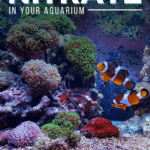 How To Reduce Nitrate In Your Aquarium - Pin