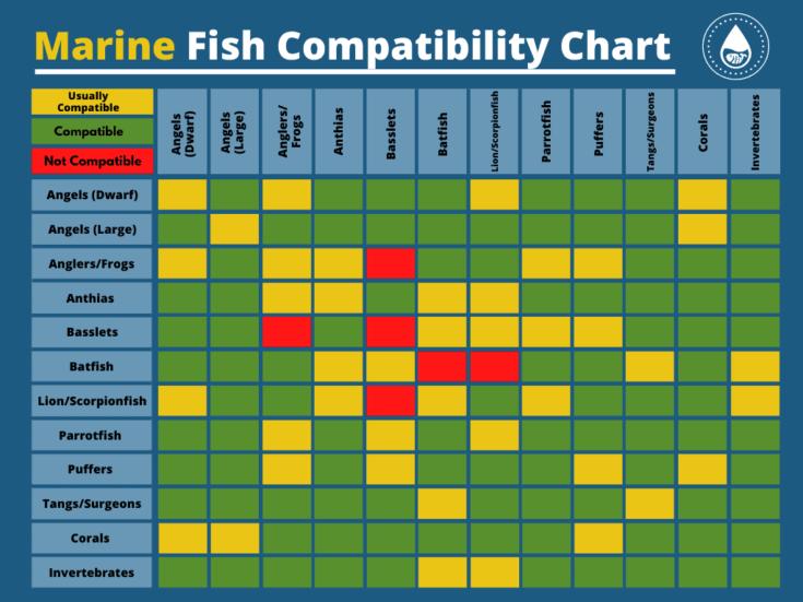 Marine Fish Compatibility Chart
