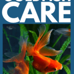 Ultimate Guide to Goldfish Care- pin