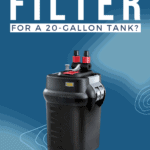 What's The Best Filter For A 20-Gallon Tank? - Pin