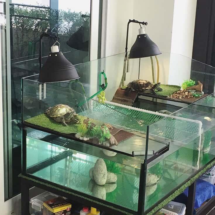 Double Turtle Tank