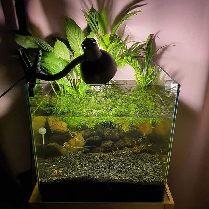Planted Turtle Aquarium