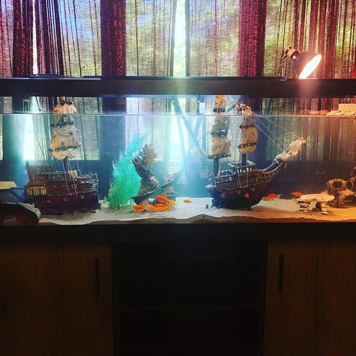Creative Themed Turtle Aquarium