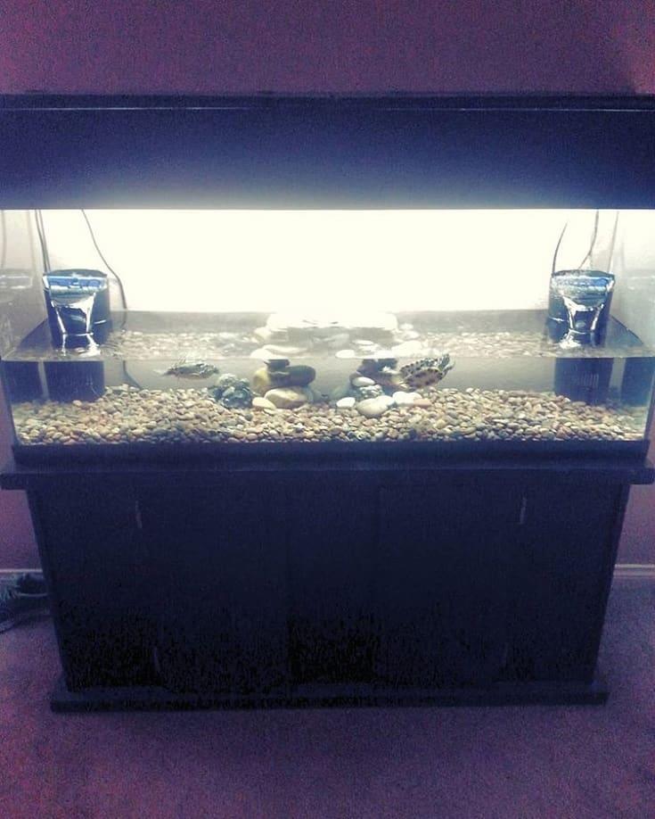 Large Turtle Aquarium