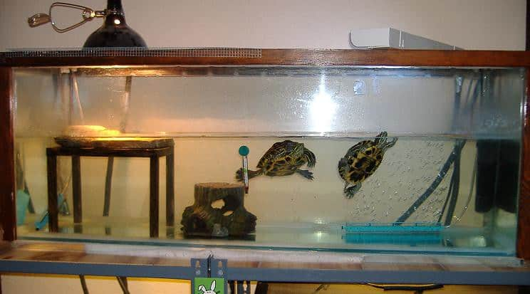 The old turtle tank