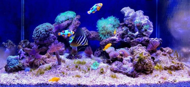 Stunning reef aquarium.
