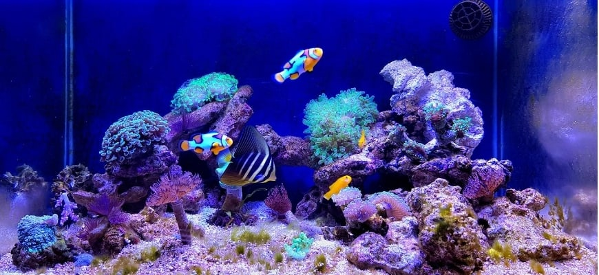 Best Nano Reef Tanks:Guide and Product Reviews - Focus shot of aquarium reefs and fishes.