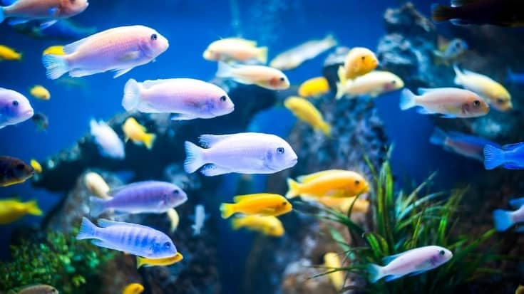 colorful fishes in a tank
