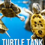 Turtle Tank Ideas and Set-Up-pin