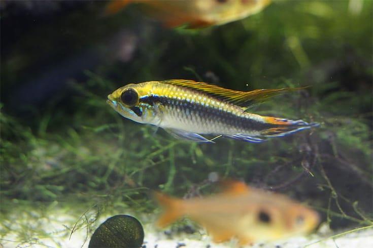 at Suma aquarium.