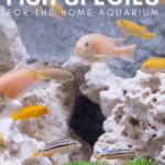 29 Coolest Fish Species For The Home Aquarium-pin