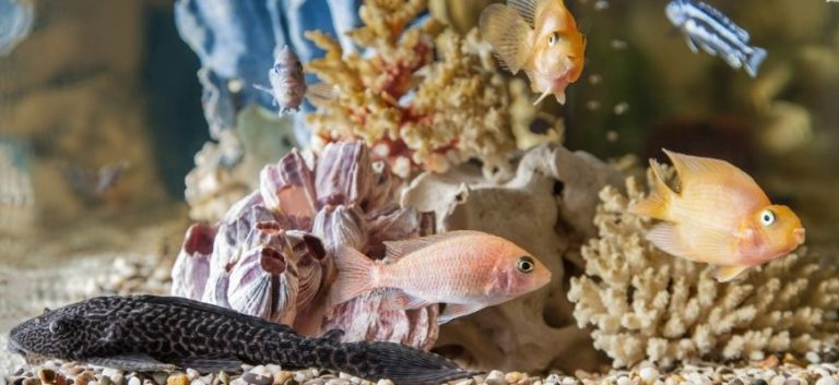 Fishes swimming in the aquarium with plants and substrate