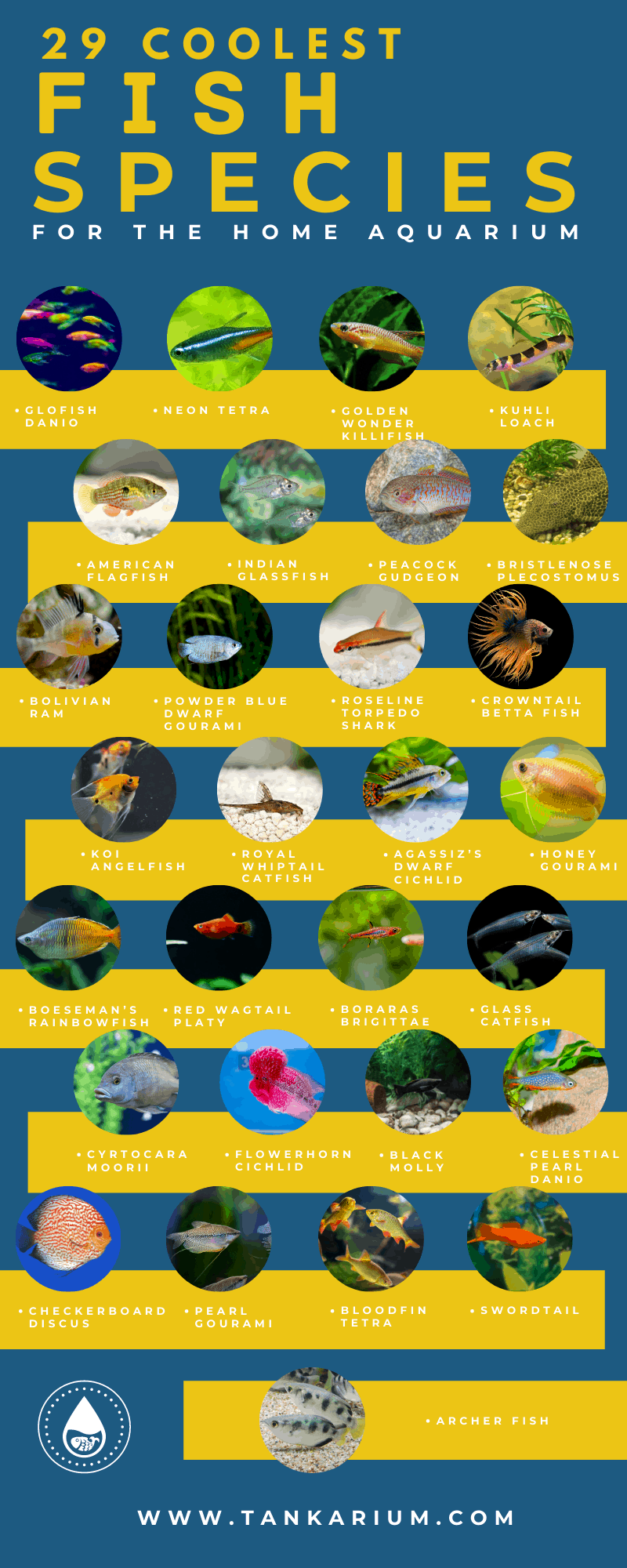 29 Coolest Fish Species For The Home Aquarium-infographics