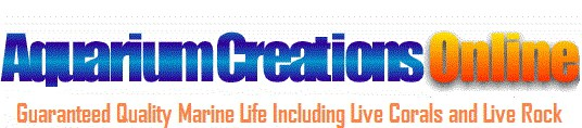Aquariumcreationsonline.net logo